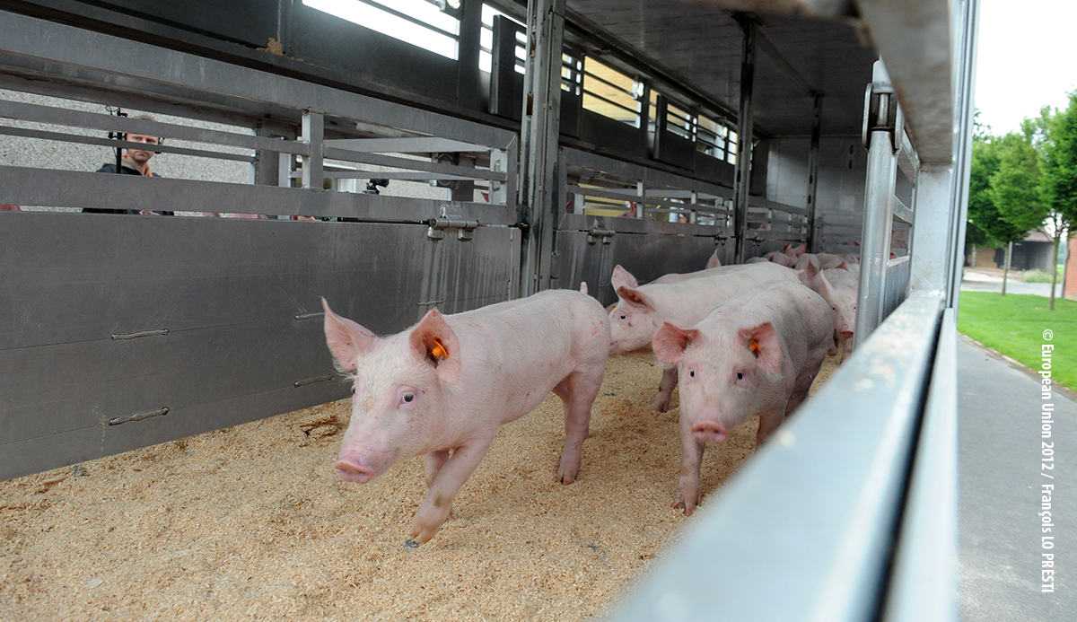 Background paper: Animal welfare in the EU