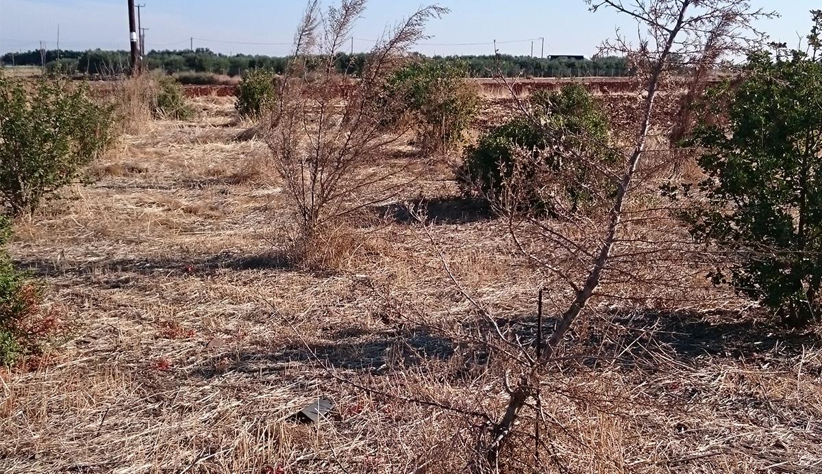 AA Desertification