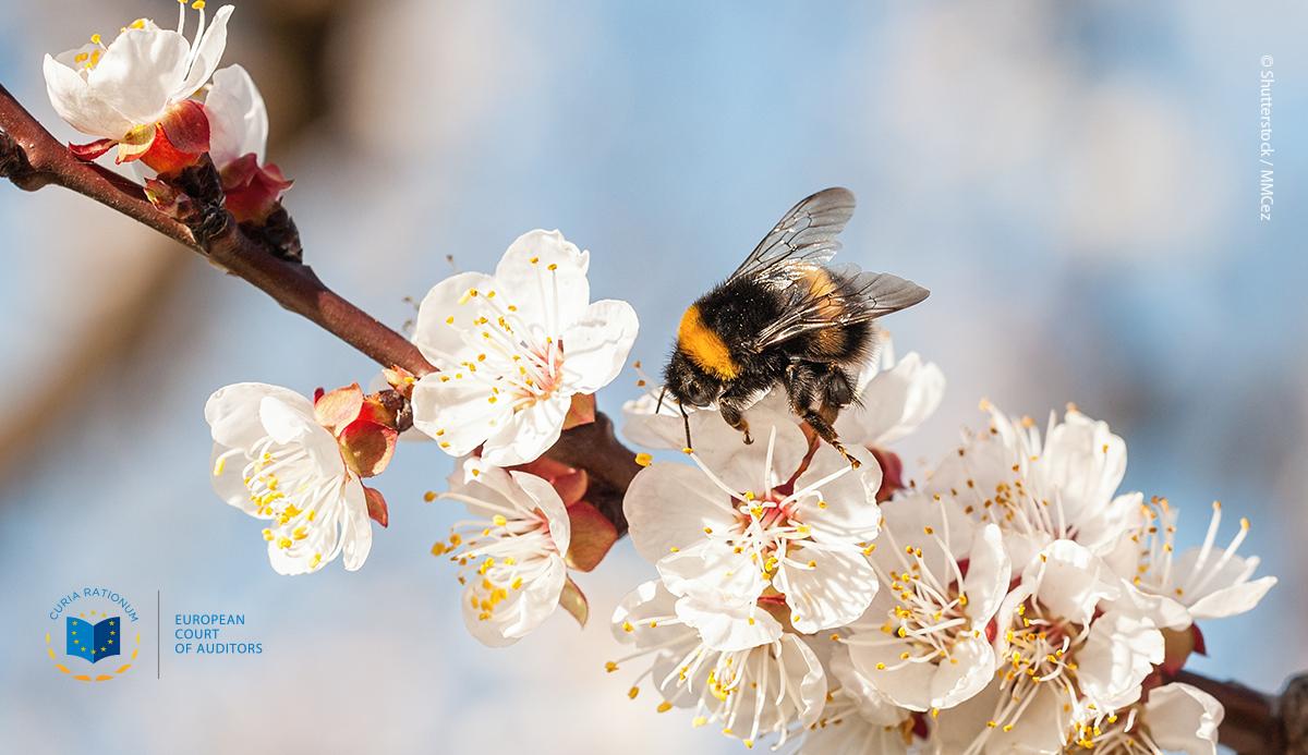 Különjelentés 15/2020: A vadon élő beporzók védelme az Unióban: nem hozott gyümölcsöt a Bizottság kezdeményezése