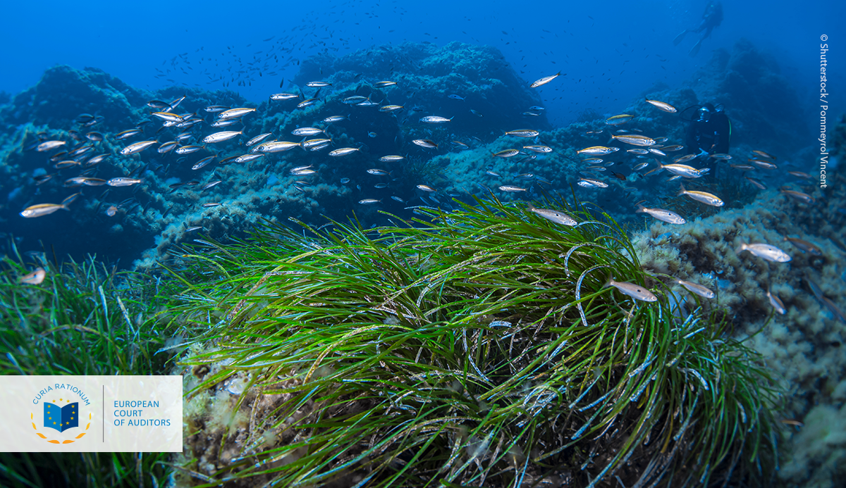 Special Report 26/2020: Marine environment: EU protection is wide but not deep