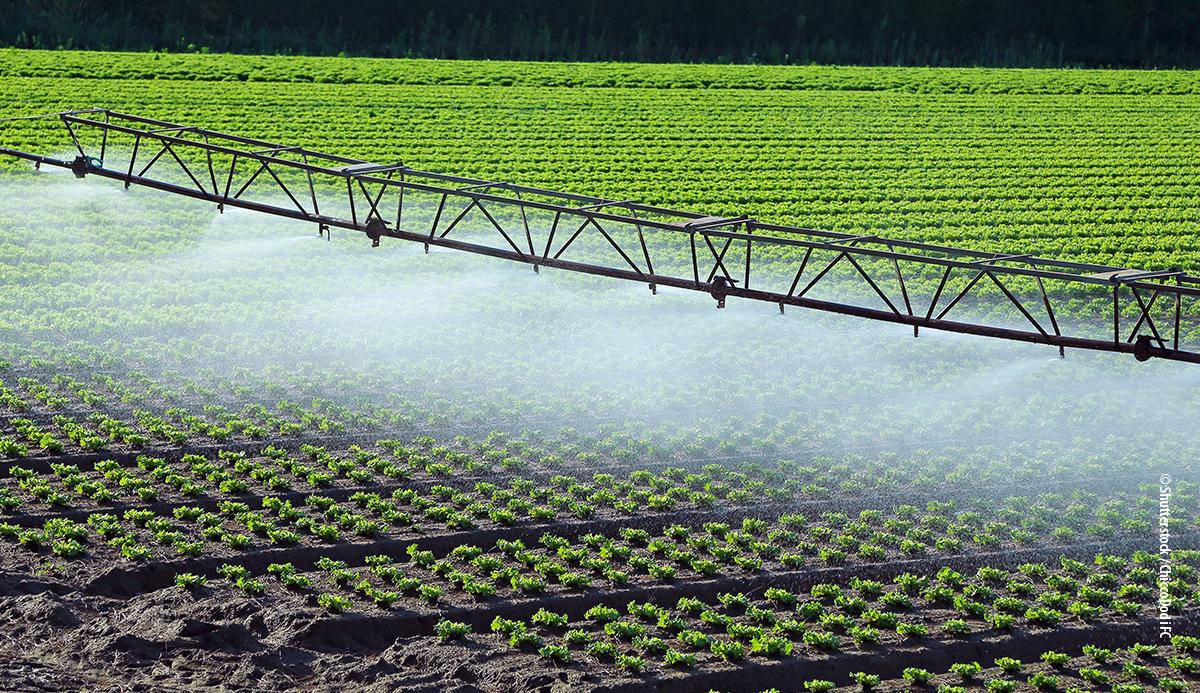 Ειδική έκθεση 20/2021: Βιώσιμη χρήση των υδάτων στη γεωργία: πιθανότερο τα κονδύλια της ΚΓΠ να ευνοούν τη μεγαλύτερη παρά την αποδοτικότερη χρήση νερού